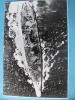 大日本帝国 海軍 太平洋戦争 戦艦 大和 レイテ沖 写真 944