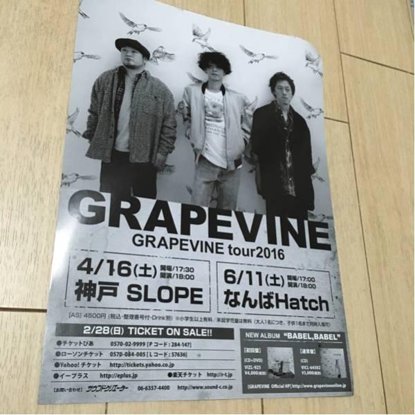 グレープバイン grapevine ライヴ 告知 チラシ 2016 大阪 神戸