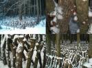 大分県産乾椎茸じいちゃん原木栽培乾しいたけどんこM150g