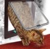 ペットドア 猫 小中型犬 簡単設置出入り口 調整機能 空室対策PD4