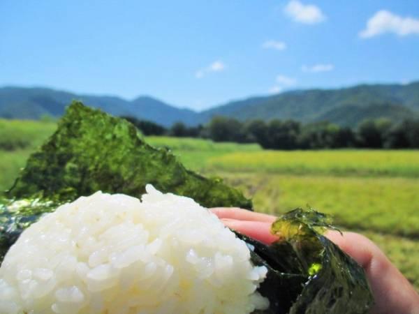 山口県阿東産コシヒカリ30kg玄米【食味優良・殺虫殺菌剤不散布なので玄米食向き!色彩選別済み!】