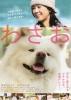 映画チラシ『わさお』2011年 薬師丸ひろ子/甲本雅裕/笹野高史