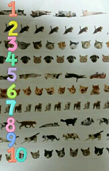 桃9 マスキングテープ mt 岩合光昭 世界ネコ歩き 限定_色は違いますが柄の参考にして下さい!