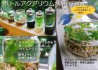 Btベタやコッピーにも♪ボトルアクアリウム水草set☆国内自社ファーム栽培で新鮮!状態良好!!☆充実のおまけ付き☆