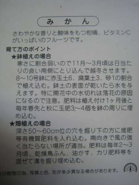 宮川早生みかん(蜜柑)苗木_画像2