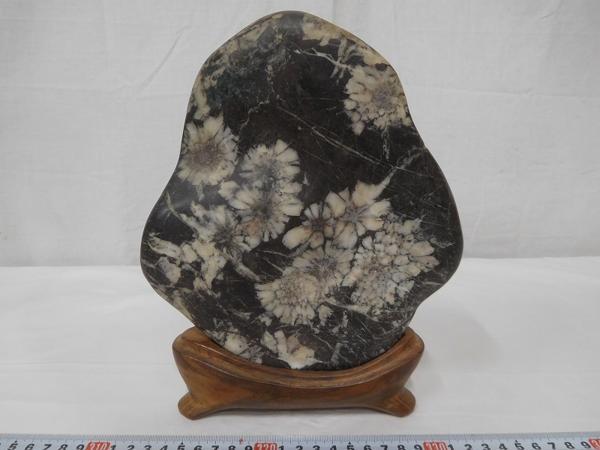B06351 菊花石 白菊 鑑賞石 水石 盆石 木製台座付 置物 飾物