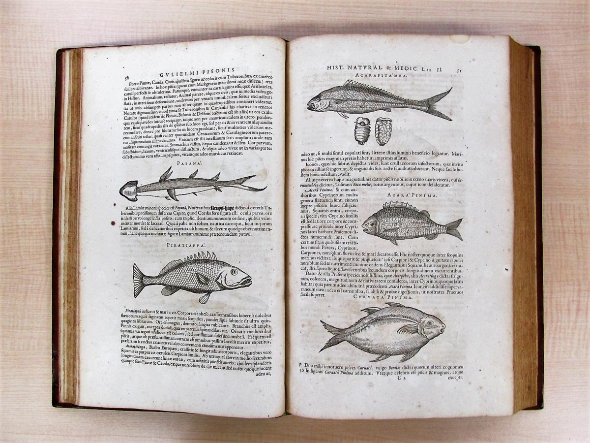 1658年刊『De Indiae utriusque re naturali et medica』熱帯医学の父ウイレム・ピソと博物学者マルクグラーフの歴史的名著_画像5