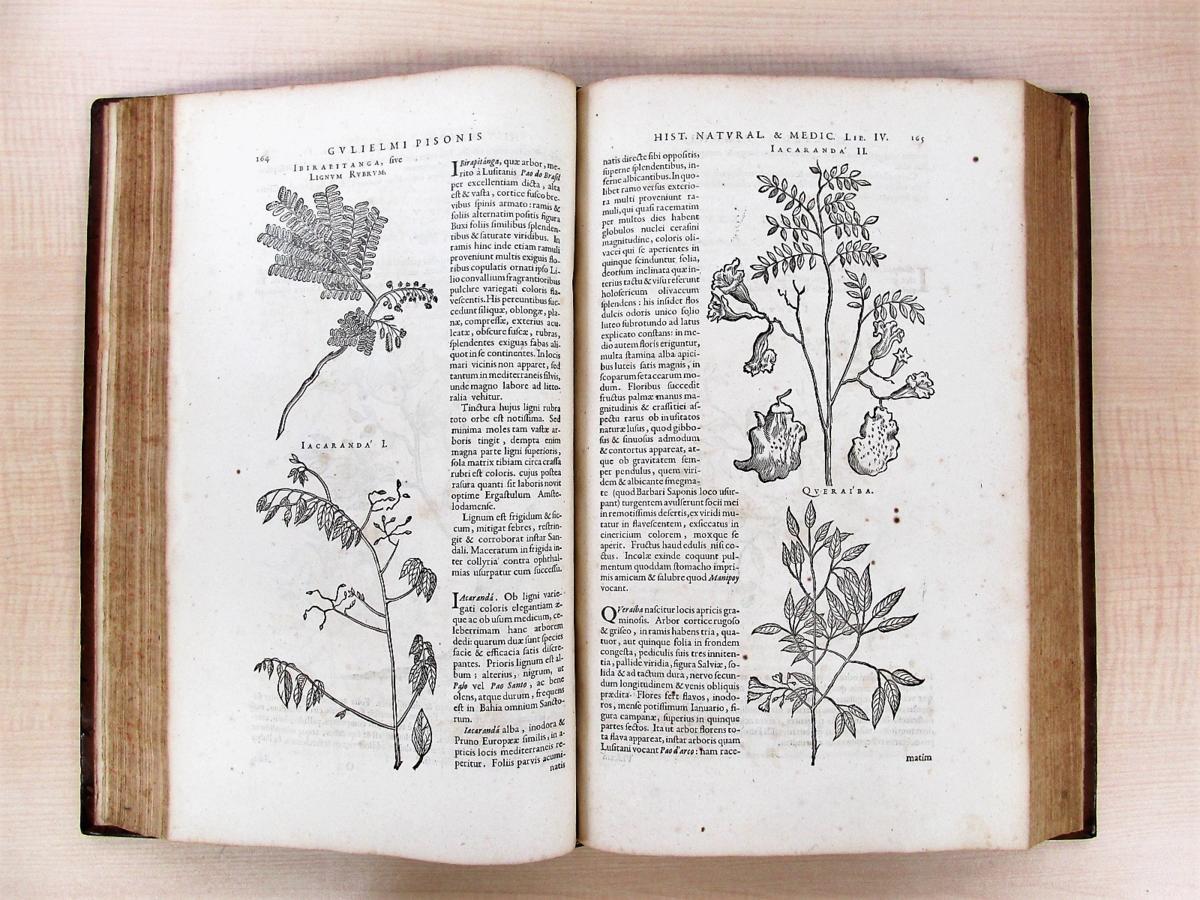 1658年刊『De Indiae utriusque re naturali et medica』熱帯医学の父ウイレム・ピソと博物学者マルクグラーフの歴史的名著_画像8