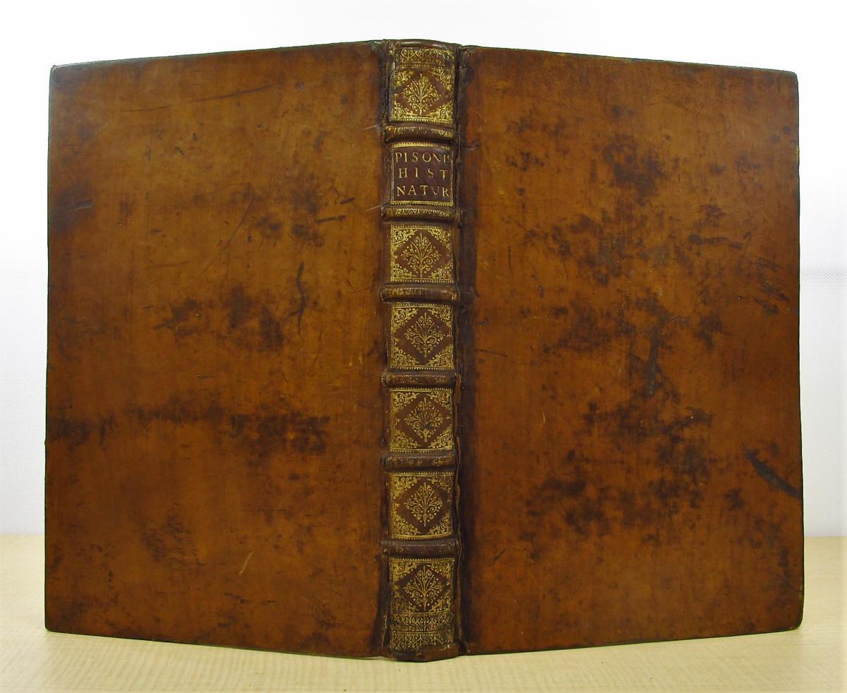 1658年刊『De Indiae utriusque re naturali et medica』熱帯医学の父ウイレム・ピソと博物学者マルクグラーフの歴史的名著_画像2