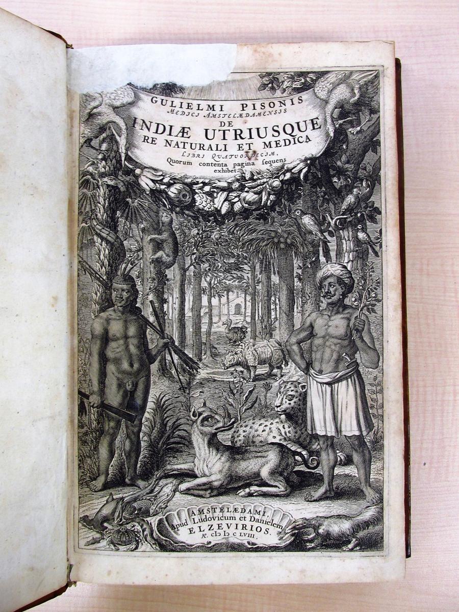 1658年刊『De Indiae utriusque re naturali et medica』熱帯医学の父ウイレム・ピソと博物学者マルクグラーフの歴史的名著_画像3