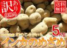 送料無料/訳あり北海道産インカのめざめ 5kg/規格外 10