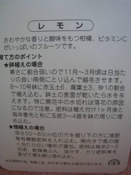 檸檬(レモン)苗木_画像2