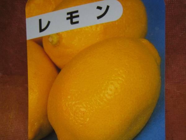 檸檬(レモン)苗木_画像1