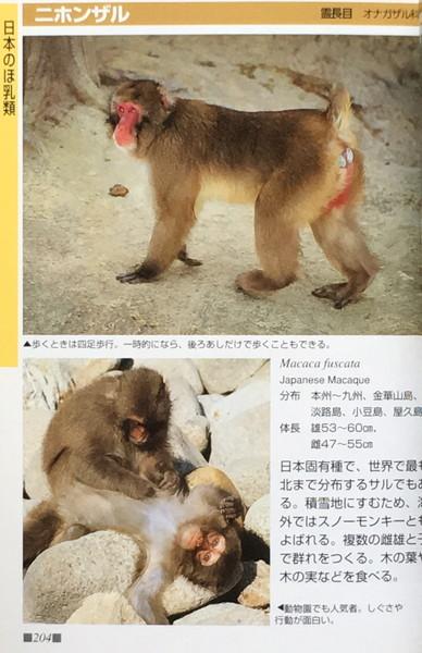 『ヤマケイポケットガイド19 動物園の動物』 さとうあきら 山と渓谷社_画像3