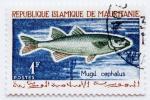 モーリタニア切手 魚 ボラ 1964年 さかな アフリカ 郵便 郵趣 動物 生物 生き物 いきもの Mauritania