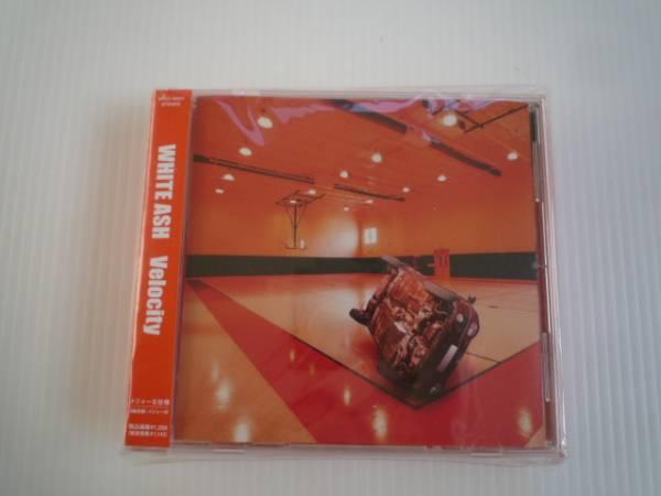 【お得!】★ホワイトアッシュ/WHITE ASH★ Velocity CD メジャー_画像1
