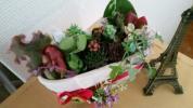 多肉植物寄植カット苗葉挿センペルセダムエケベリアおまけ付(赤)