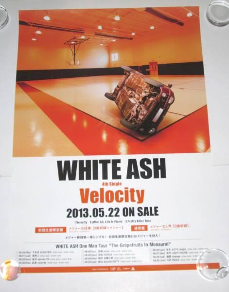 t WHITE ASH 『Velocity』 告知ポスター ホワイト・アッシュ