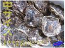 2箱、今が旬!! 天然「岩牡蠣M-5kg」(30個以内)」生