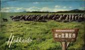 アンティーク 絵はがき 北海道 羊ヶ丘展望台 2枚セット