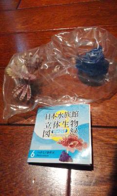 日本水族館立体生物図録 ハナミノカサゴ_内袋未開封、リスト付きです。