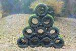 ◆◇黒BIGろ材10個ハウス ジャイト南米ウィローモス付き◇◆