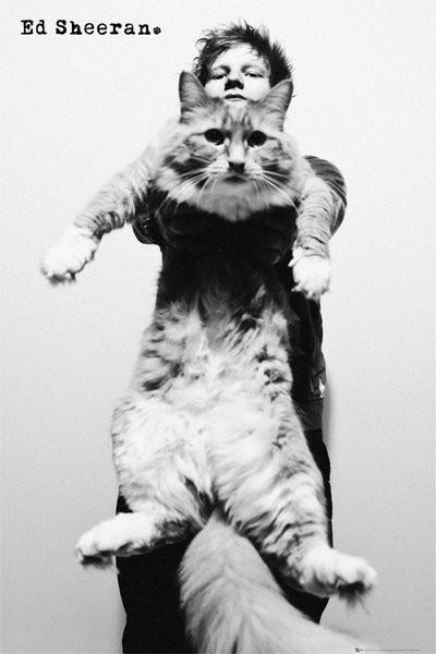 th/ポスター エド・シーランEd Sheeran Catジャンボねこグラミー