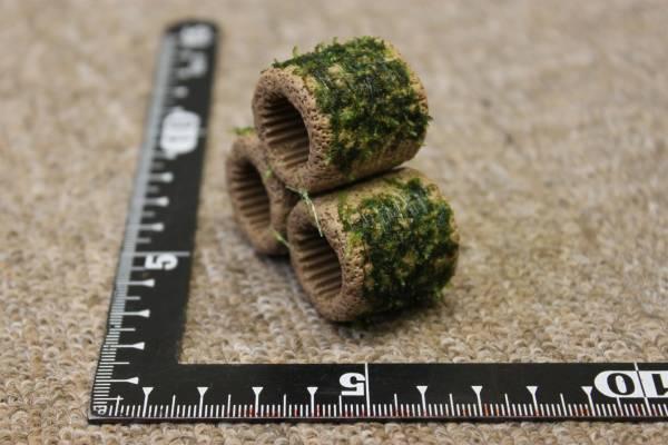 ★☆BIGろ材3個ハウス プレミアモス タイ産SP付き2☆★_綺麗な緑色でモコモコに成長します。