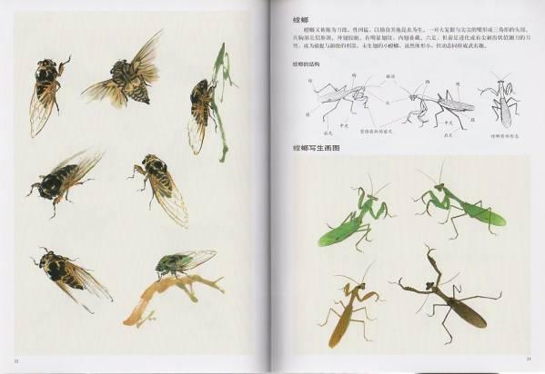 9787554703595  草虫  彩墨画法  中国水墨画技法  昆虫の描き方 絵はがきにも参考_画像2