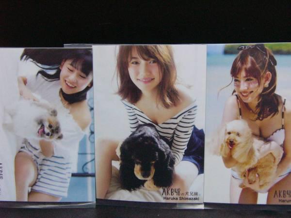 AKB48 犬の兄妹 会場 限定 購入特典 生写真 3種 コンプ① ライブ・総選挙グッズの画像