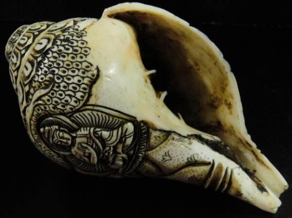 ◆チベット密教法具 法螺貝(シャンカ)五智如来-C