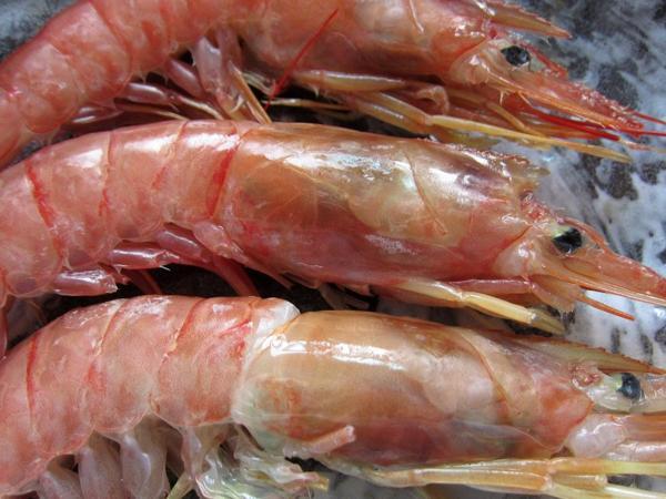 5箱、最大級「赤海老3L」 2kg 50尾 極寒の特別な海老-生身用-極甘です!!