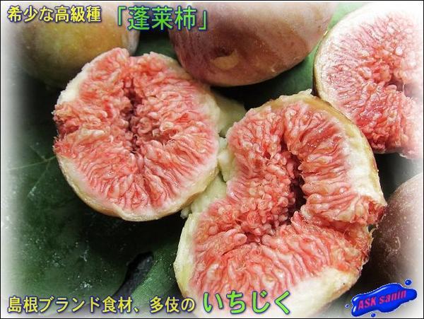 10箱、多伎の特別な 「いちじく1.5kg」■島根ブランド■蓬莱柿■
