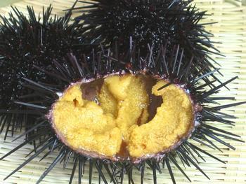 奥尻島産 『生造り粒うに』70g入ビン/一夜漬の薄塩!(税込)_黒く、とげが長いのが特徴のムラサキウニ