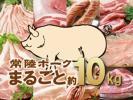 1円【1数】常陸ポーク豚まるごと約10kg4129/業務用ブロック