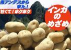 【送料無料】北海道産インカのめざめ/新じゃが芋5kg 10月