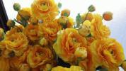 ■おすすめ!業務用大量 【造花】 カメリア イエローオレンジ TGT-065  1箱24本入り フラワーアレンジメント