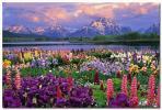 グランドティトン国立公園 ポスター 花 アメリカ 湖 景色 風景