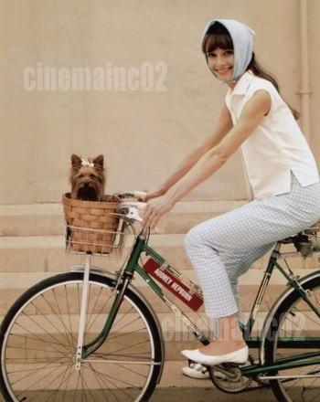 即決!オードリー・ヘップバーン、犬と自転車に乗る写真 グッズの画像
